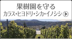 果樹園を守る、カラス・ヒヨドリ・シカ・イノシイ