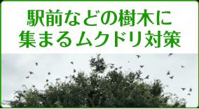 駅前・公園などの樹木に集まるムクドリ対策