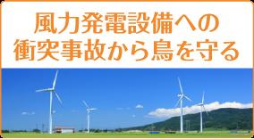 猛禽類・希少動物の風力発電への衝突防止
